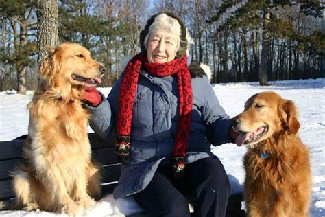 golden retriever stomach problems bark busters breed of the month the golden retriever
