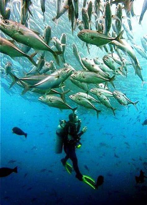 dive courses scuba diving in thailand padi courses in phuket phi phi