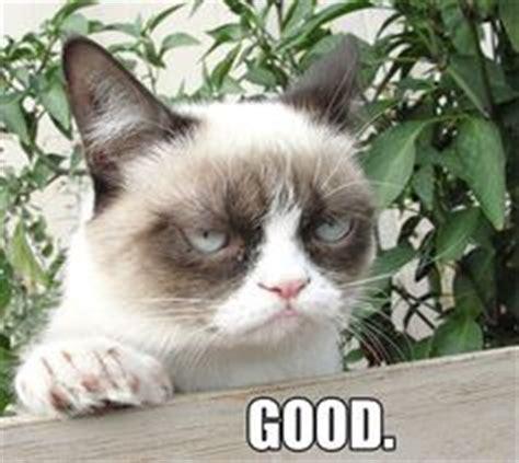 Angry Cat Good Meme - grumpy cat on pinterest memes grumpy cat meme and the
