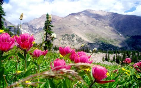 beautiful mountain landscape beautiful pink mountain