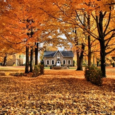 Cottage In The Trees by Fall Design Season Autumn Interior Decor
