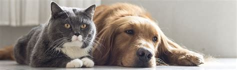 do puppies really need puppy food premium cat food does your pet really need it petstock