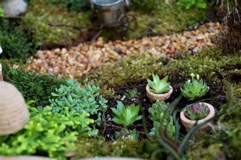 Make Plant - how to make a miniature garden in a container hgtv