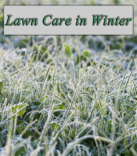 Winter Lawn Care | winter lawn care winter lawn maintenance quiet corner