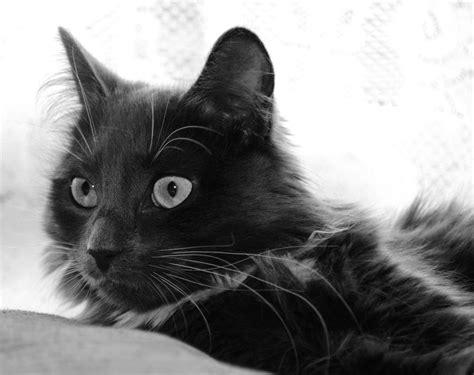 black loki black and white loki 2 by forestina fotos on deviantart