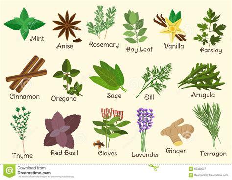 herbes de cuisine condiment herbes et 233 pices de cuisine illustration de