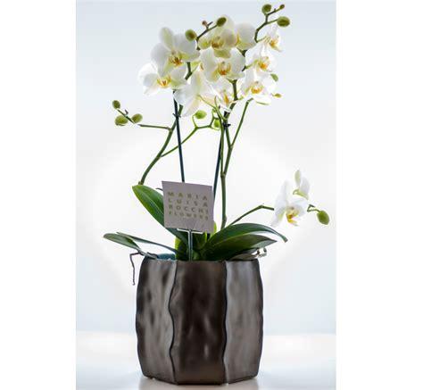 orchidee vaso vaso con orchidea multiflora cosaporto it