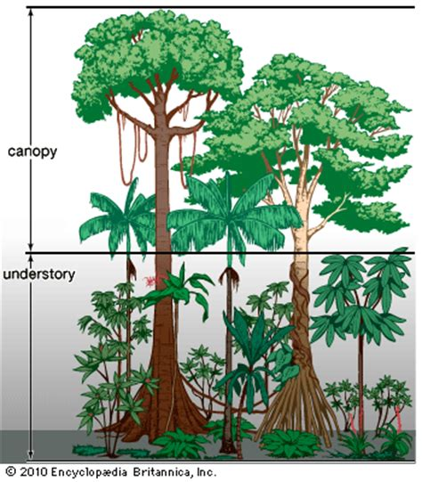 different types of tropical plants trees flowers rain forest kids encyclopedia children s homework