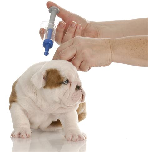 getting puppies pet vaccinations l hamilton road animal hospital l columbus