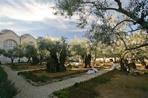 file gethsemane garden mount of olives jpg wikimedia