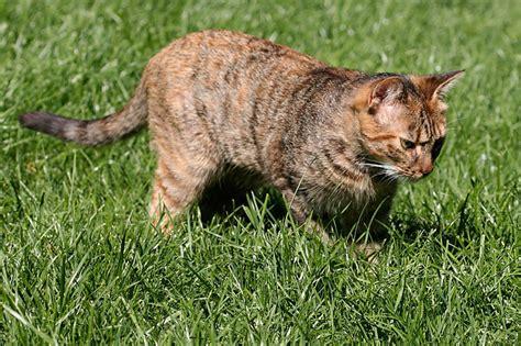 katzen aus garten fernhalten katzen fernhalten die katzen vom garten fernhalten