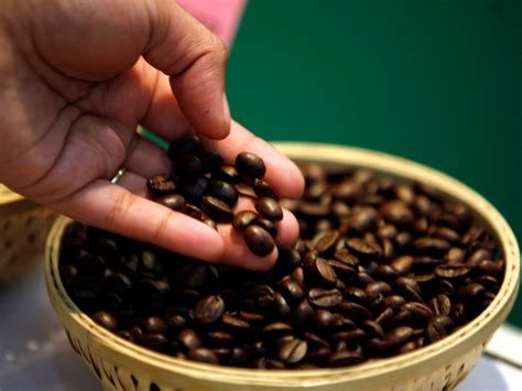 best coffee about the best coffee beans brazil coffee facts