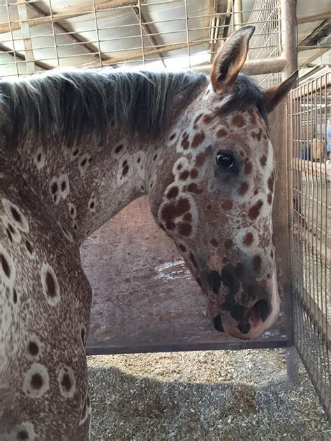 eye tattoo for horses 82 best horse of a different color images on pinterest