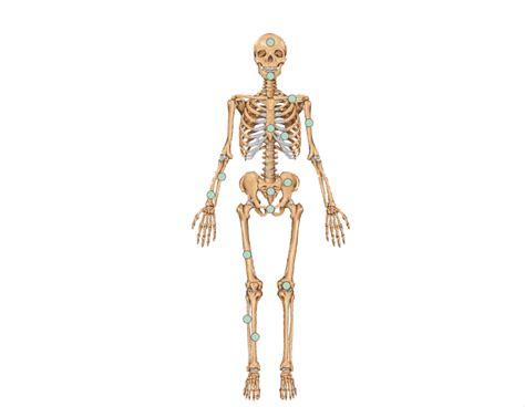 game of bones bone bones of the skeleton anatomy games