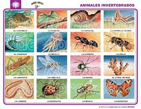 imagenes de animales inbertebrados imagenes de animales vertebrados e invertebrados