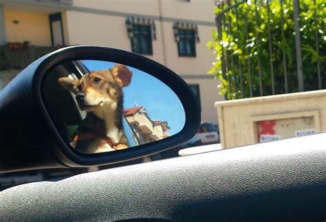 fiori di bach per cani ansiosi viaggiare in serenit 224 con il proprio 232 divertentissimo