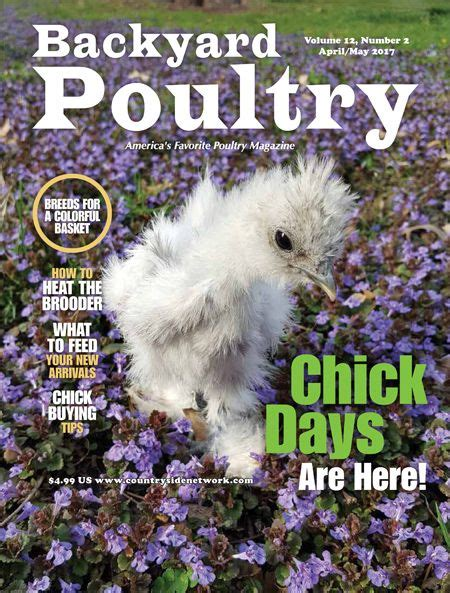 backyard poultry magazine adelaide chicken sitting service blog
