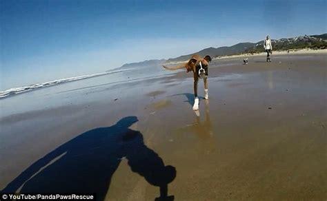 Kursi Roda Anjing anjing istimewa tegar lincah meski hanya berkaki dua