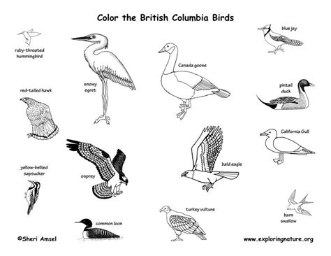 biomes of the world coloring page biome map coloring page coloring pages
