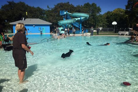 Backyard Pools Saskatoon Pets Service Animals Go Swimming On Day For Outdoor