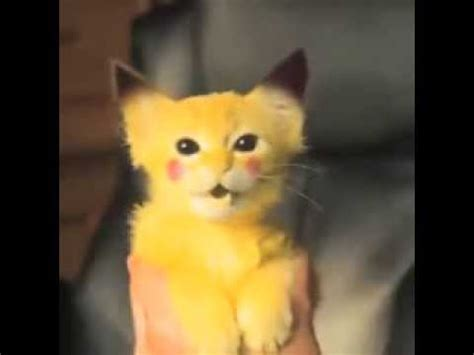 pikachu kitty  real life cute funny vines youtube