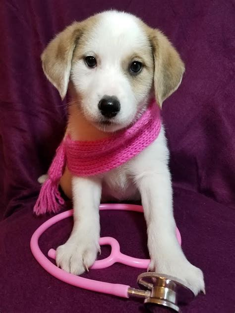 puppy paws rescue fur paws rescue newark delaware de localdatabase