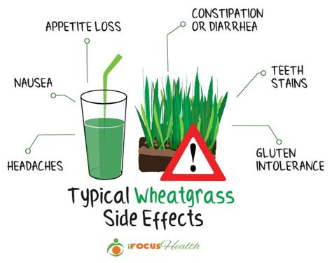 Wheatgrass Detox Side Effects can wheatgrass juice really make you healthy and happy