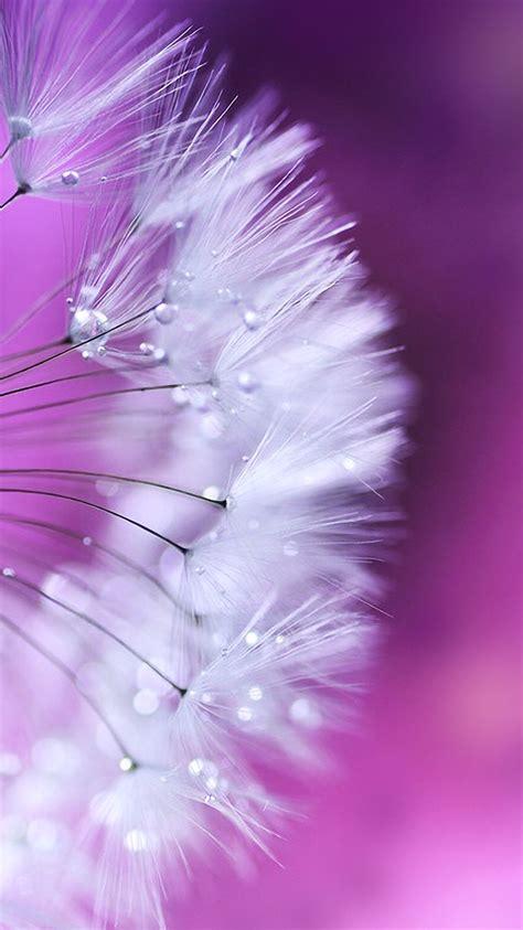 wallpaper pink dandelion be linspired september 2014 iphone wallpaper
