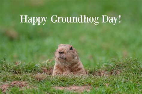 groundhog day unblocked groundhog day 2017 all the 28 images punxsutawney phil