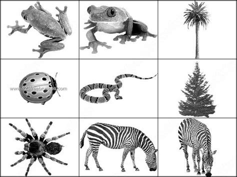 zebra pattern photoshop brushes animal brushes free snake zebra frog photoshop brushes