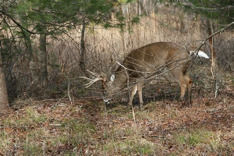 gf forecast our best places to hunt deer game fish 5 strategies for successfully hunting the whitetail rut