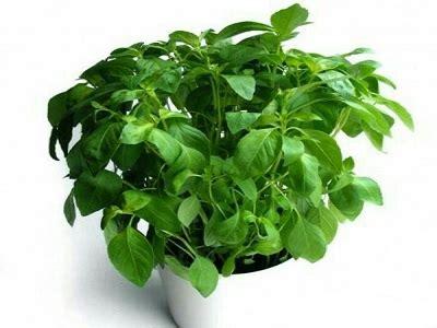 manfaat herb garden solusi pintar  sehat   rumah