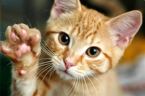 imagenes geniales de gatos fotos e im 225 genes de gatos gratis