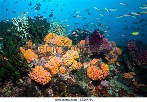bay colored colored coral reef triton bay stock photos colored coral