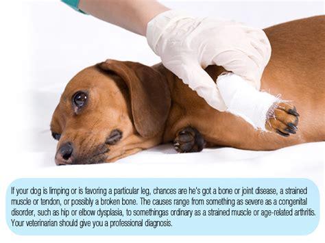 disease in dogs skeletal disorders and bone diseases in dogs boneo canine 174