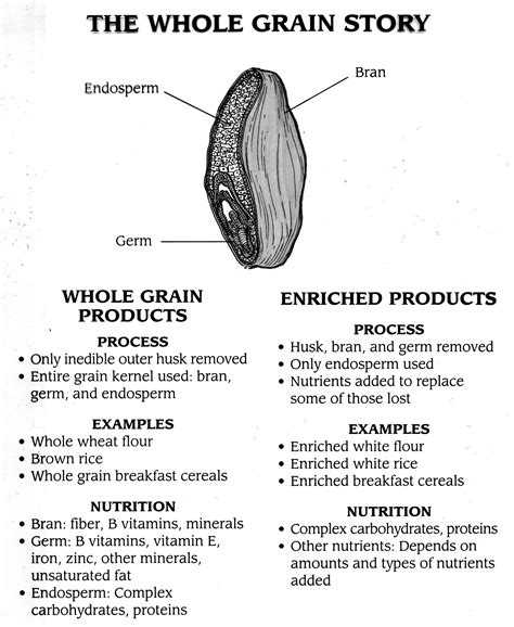 whole grains pdf grains and rice lab