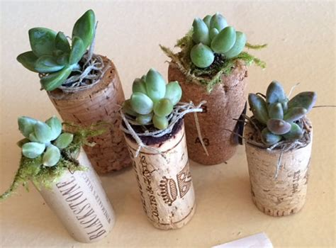 items similar to wine cork succulent planters on etsy