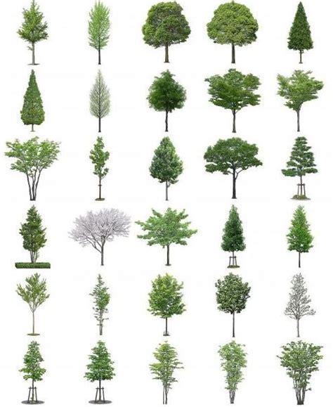 templates tree photoshop free psd designs vectors 50 psd files of furukawa 01