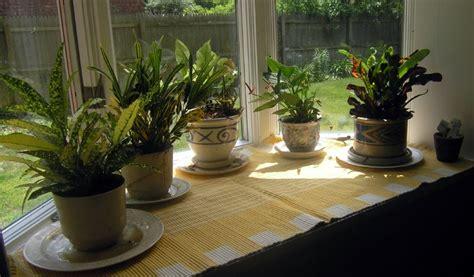 Low Light Bathroom House Plants Green Living Tips For The Winter Season