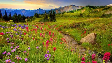 meadow  mountains colorful flowers meadow  grass