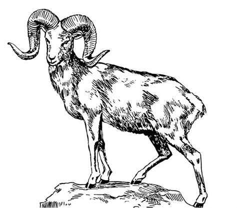 sheep coloring pages getcoloringpagescom