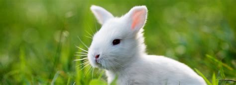 pet stores in ohio that sell puppies rabbits as pets petsmart