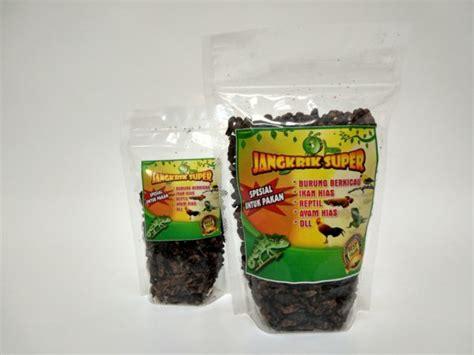 50 Gram Temulawak Kering jangkrik kering pakan arwana murah tinggi protein kemasan 100 gram suryaguna distributor