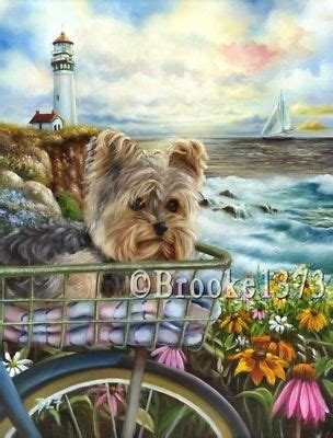 best yorkie shoo 90 best images about yorkies on swim beaches and yorkies
