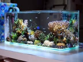Aquarium Design Ideas by Decoration Saltwater Aquarium Design Ideas Unusual