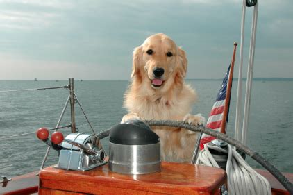boat names after dogs 5 boat dogs your kids really need boats