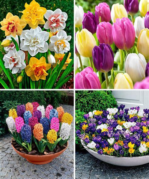 fiori bulbi primaverili acquista confezione bulbi primaverili bakker