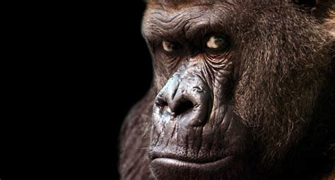 gorilla in the room an open reply to dan greenberg matt cbell s blue hog report