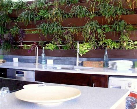 plante cuisine plantes vertes pour cuisine soins et conseils
