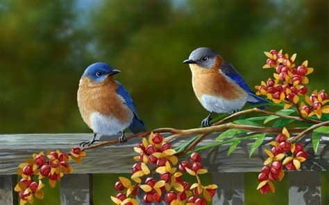 bird couple wallpaper hd birds couple hd wallpaper download hd birds couple hd